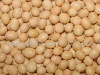 胶体磨磨豆子―食品行业中的应用